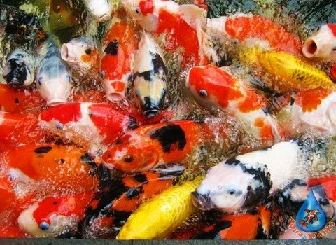 Biologicheskiy-kontrol-sostoyaniya-ryby